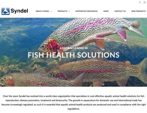 Syndel Website Design & Development